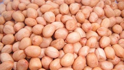 Java GN Seeds