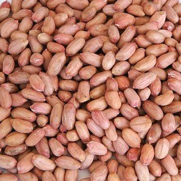 Bold GN Seeds
