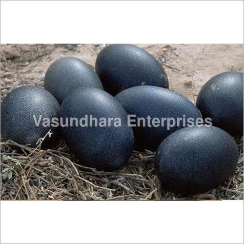 Black Poultry Egg