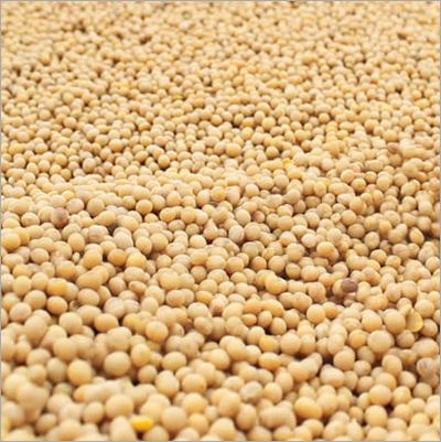 Soyabean Pulses