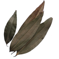 Indian Dry Bay Leaves