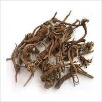 Akarkara Herbs Roots