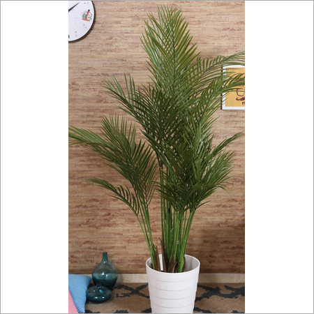 Indoor Decorative Plants