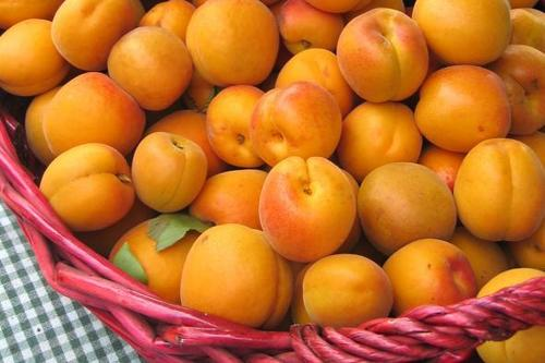 Apricots Basket