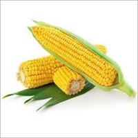Yellow-Maize
