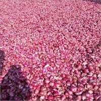 Fresh Organic Small Onion