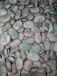 Broad Bean Seed