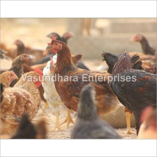 Giriraja Chicken