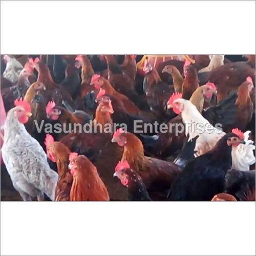 Desi Country Chicken