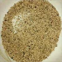 Amrood Seeds