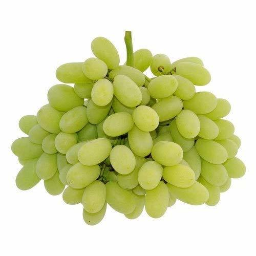 Super Quality Super Sonaka Grapes