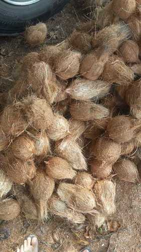 Leading Price Indian Semi Husked Coconuts