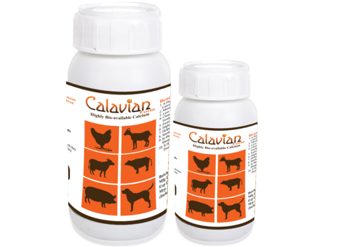 Cattle Calcium Supplement (Calavian)