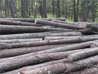 Round Wood Log
