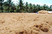 Coconut Coir Pith