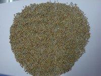 Green Millet (Bold)