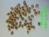 Garbanzo Seed 58-60