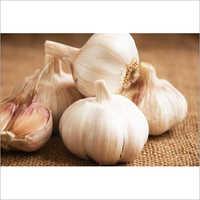 Fresh Garlic Bud