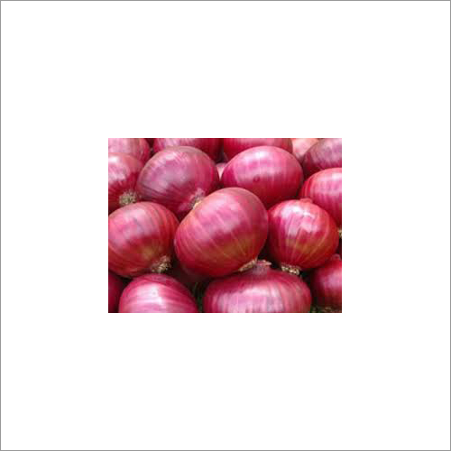 Red Onion Suppliers , Exporters & Wholesalers