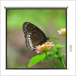 100 inch Motorized Projector Screen