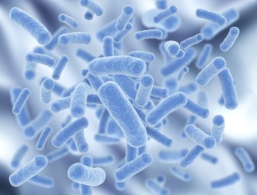 Pre Probiotics
