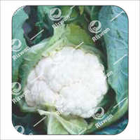 Cauliflower F1 Madhvi