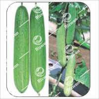 Cucumber F1 Discovery (Imp