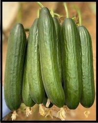 Cucumber F1 Safran