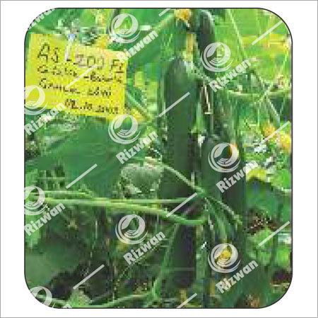 Cucumber F1 Bahar (Seedless)