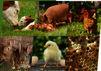 Animal And Poultry Feed Additive