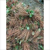 Teak Plant Sticks