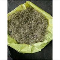 Sugar Free Plant Seeds
