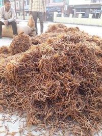 Yellow Shatavari Roots