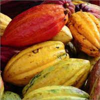 Web Cacao Pods