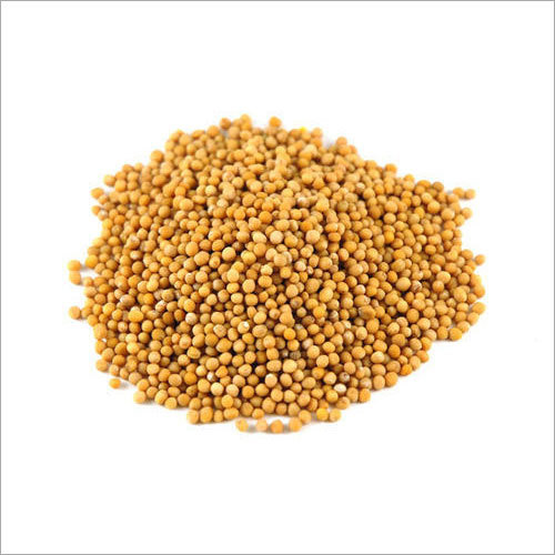 Best Grade Yellow Mustard Seeds
