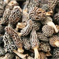 Fresh and Dried Morel Mushroom