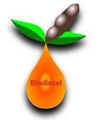 Biodiesel From Oil