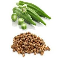 Lady Finger Seeds (Okra Seeds)