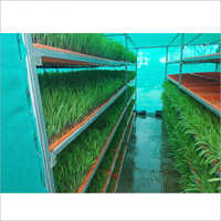 Hydrophonic Fodder Production Service