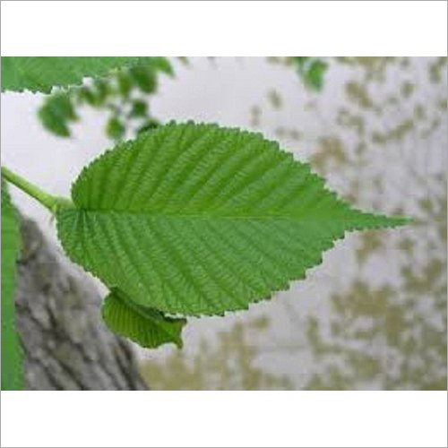 Slippery Elm Extract