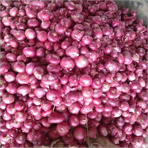 Natural Fresh Onion