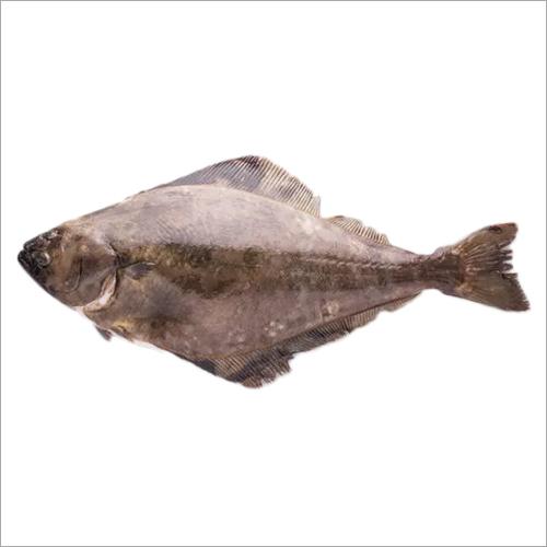 Halibut Fish