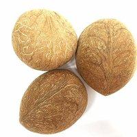 Coconut & Coconut Copra