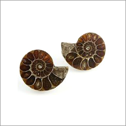 Ammonite Gemstone