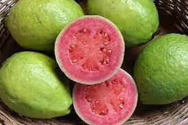 Taiwan Pink Guava Plants
