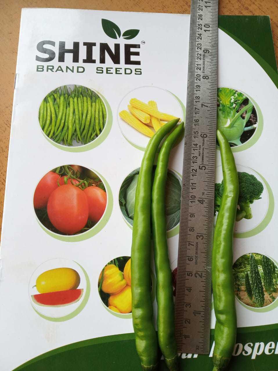 F1-Shine 610 Hybrid Chilli Seed