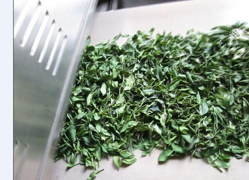 Green Tea Drying Fixation Machine
