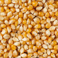 Yellow Raw Corn