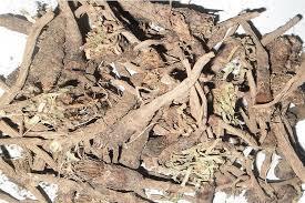 Anacyclus pyrenthum Dry Extract