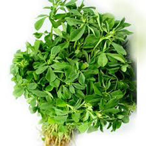 Green Methi